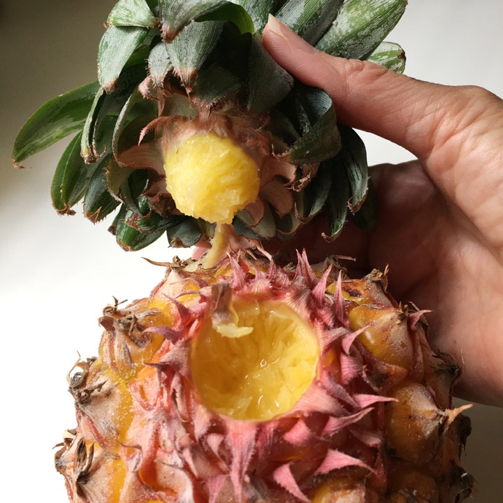A hand removing the leaves from a pineapple